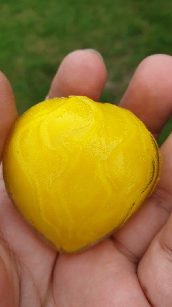 rarte wijoyo mulyo flower pearl