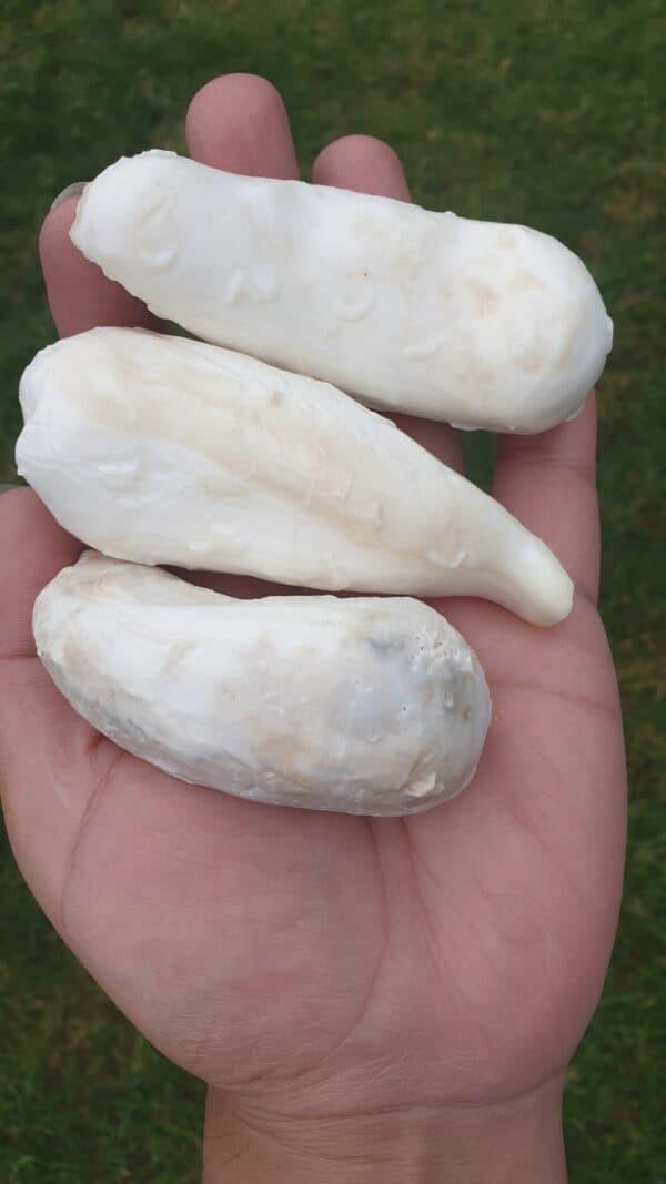 bezoar stone of white buffalo