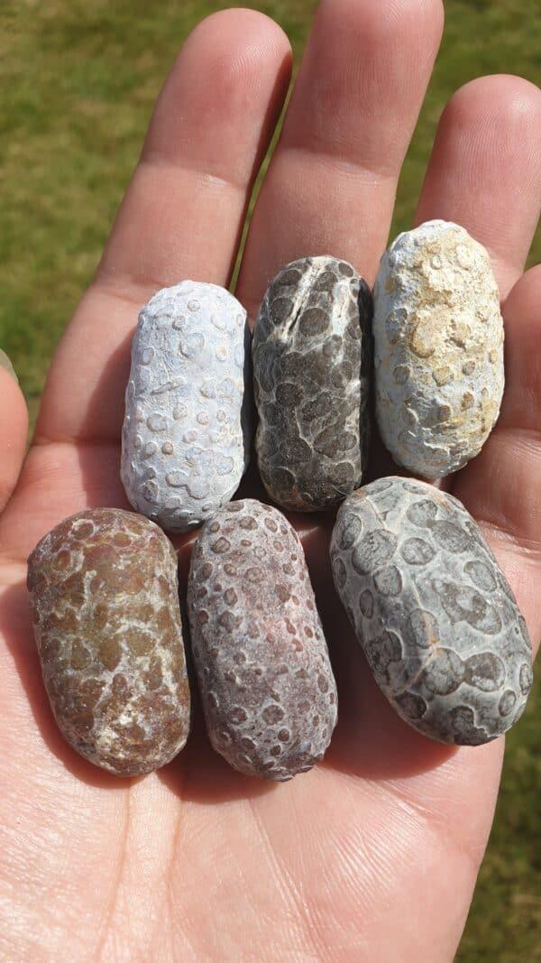 sea otter bezoar stones
