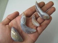 Etheric Fish Pearls
