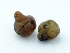 Fossilized Onion