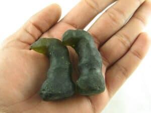 Fossilized Snake Horns